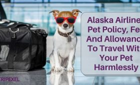 Alaska Airlines Pet Policy, Fee And Allowance To Travel With Your Pet Harmlessly