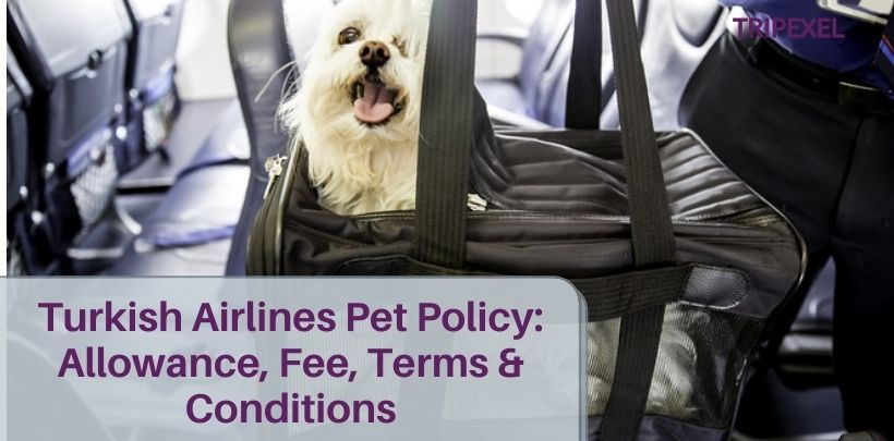 Turkish Airlines Pet Policy_ Allowance, Fee, Terms & Conditions